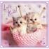 "Набор пазлов Trefl 3в1 ""Sweet & Lovely - сладкие котята"", 20 + 36 + 50 деталей, 34809"